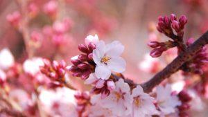 Spring 2=3